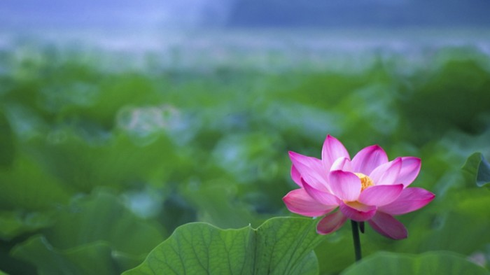 lotus-flower-buddha-tattoo-wallpaper-4